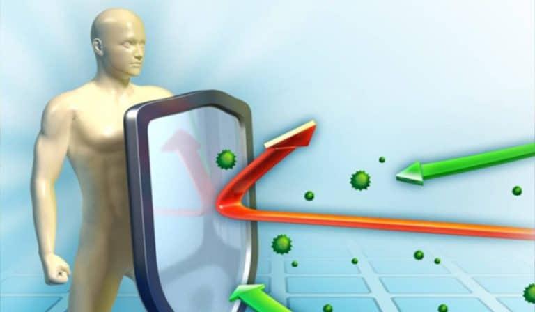 Our Wonderful Immune System