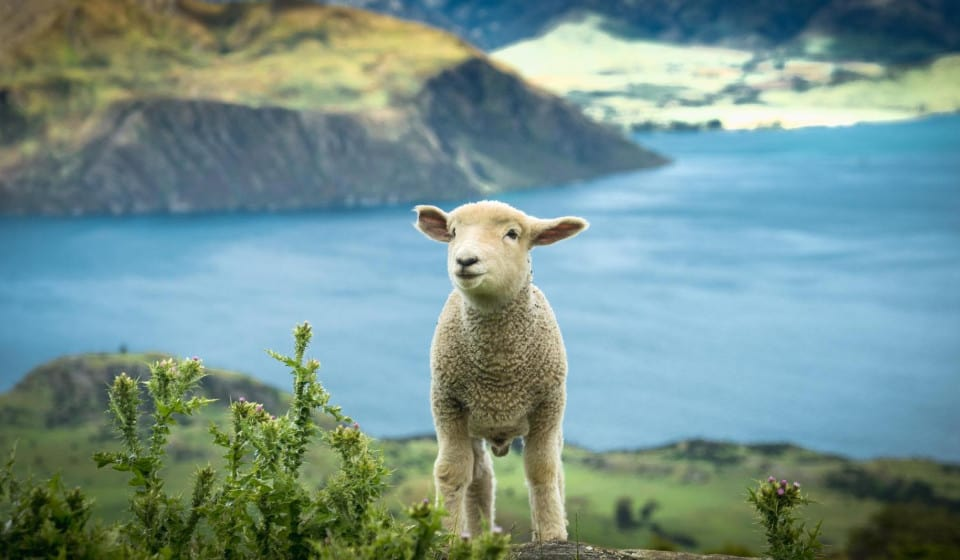 A Founding Family: Life of A B.I. In Colonial New Zealand